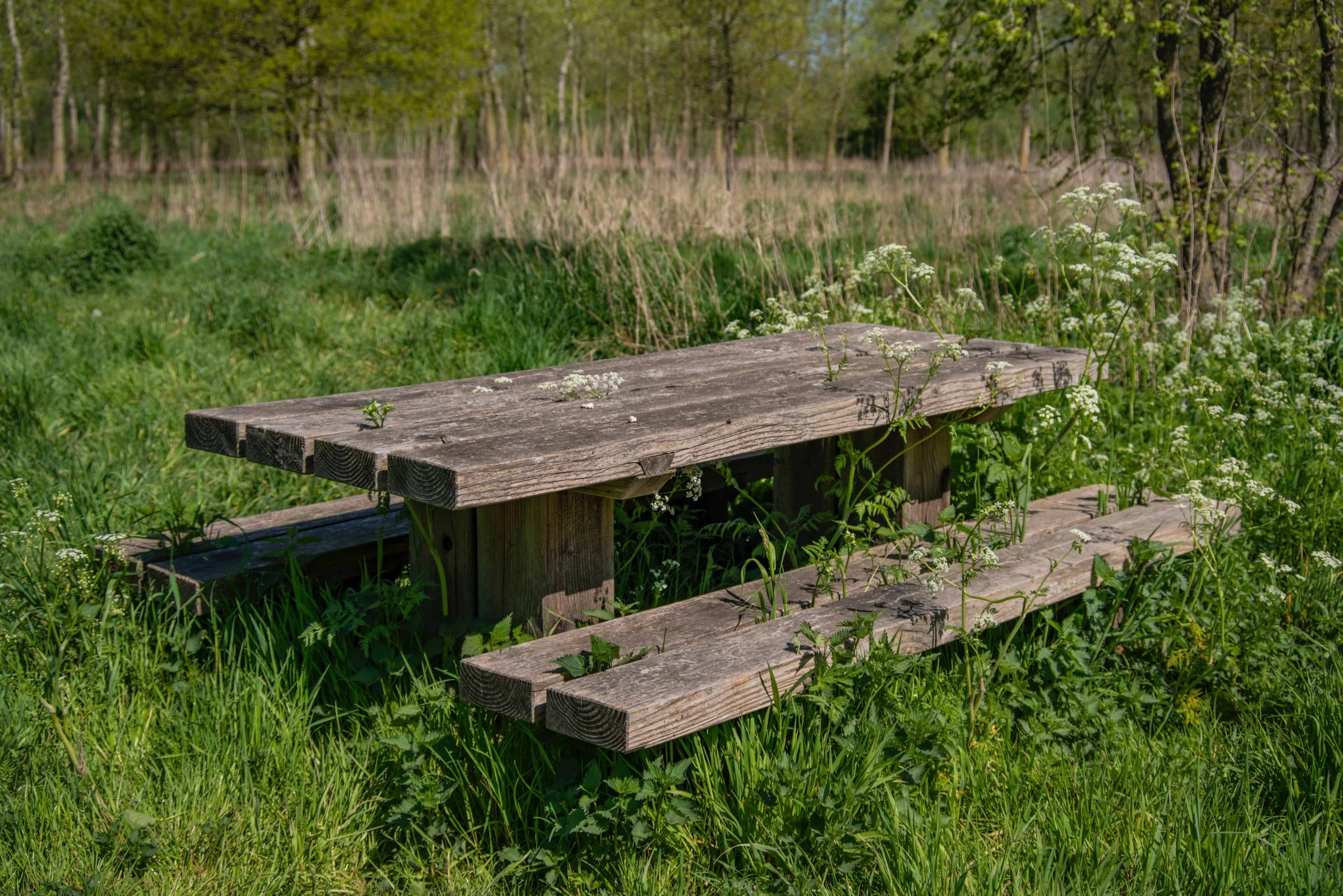 Is pressure treated wood safe for picnic table